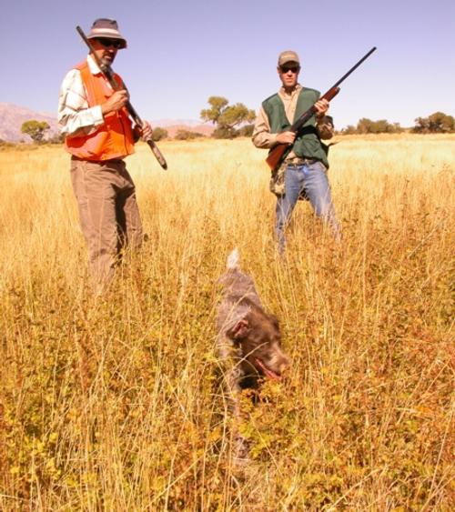 WON On-the-Spot: IT'S BACK! Lone Pine Pheasant Club has great cover and flushing birds